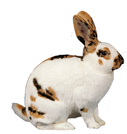 bekommen kaninchen ihre tage
