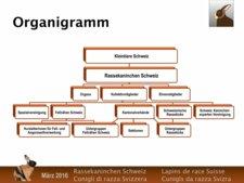 Organigramm und Funktionendiagramm