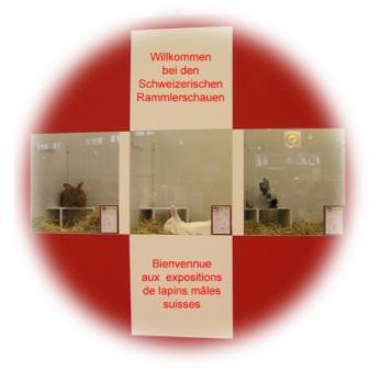 http://www.kleintiere-schweiz.ch/resources/uploads/Bilde_Rammlerschau.jpg