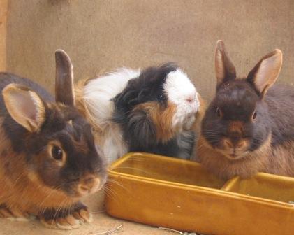 krallen schneiden bei kaninchen